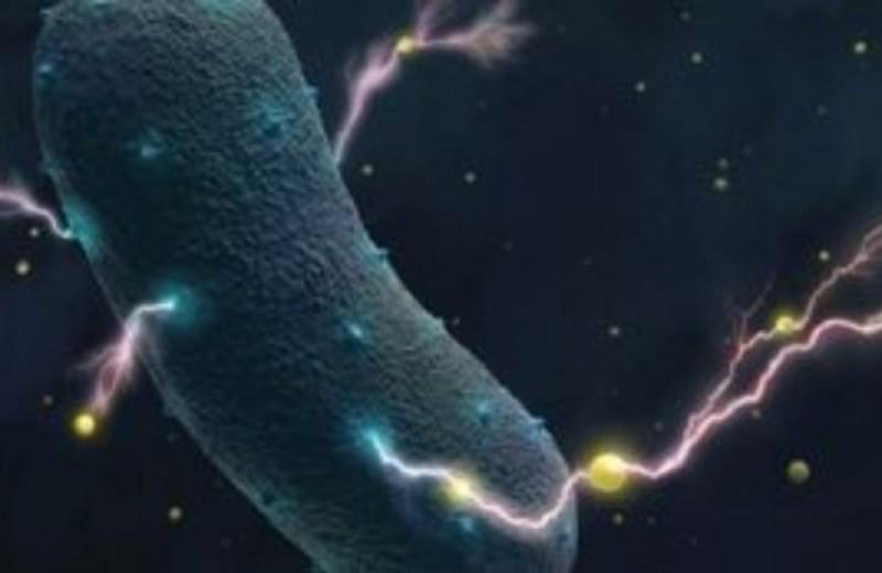Βακτήρια του εντέρου: Παράγουν ηλεκτρικό ρεύμα!